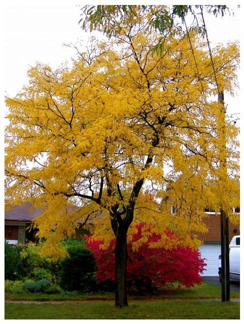 Landscaping Mississauga Gardens Best Trees For Dry